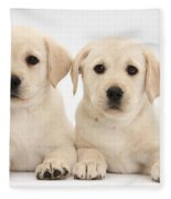 Labrador Retriever Puppies Fleece Blanket