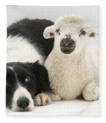 Lamb And Border Collie Fleece Blanket