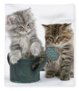 Maine Coon Kitttens Fleece Blanket