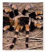 Mexican Red-legged Tarantula Fleece Blanket