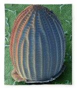 Monarch Butterfly Egg, Sem Fleece Blanket