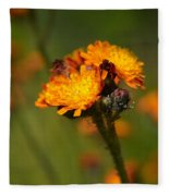 Orange Hawkweed Fleece Blanket