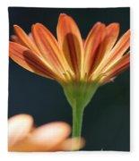 Osteospermum Named Sunadora Palermo Fleece Blanket