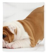 Playful Bulldog Pup Fleece Blanket