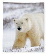 Polar Bear, Churchill, Manitoba Fleece Blanket