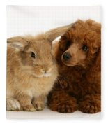 Red Toy Poodle And Rabbit Fleece Blanket