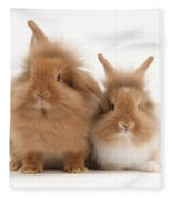 Sandy Lionhead Rabbits Fleece Blanket