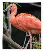 Scarlet Ibis Fleece Blanket