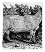Sheep, C1800 Fleece Blanket