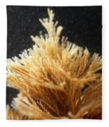 Spiral-tufted Bryozoan Fleece Blanket