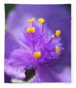 Tradescantia Named Andersonia Mauve Fleece Blanket