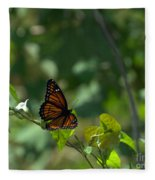 Viceroy Butterfly Fleece Blanket