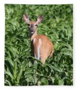 Whitetail Deer Fleece Blanket