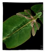X-ray Of A Giant Leaf Insect Fleece Blanket