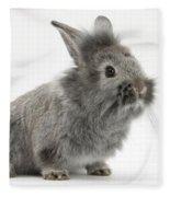 Young Silver Lionhead Rabbit Fleece Blanket