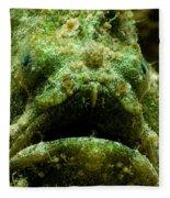Frogfish Fleece Blanket