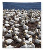 Gannet Colony Fleece Blanket
