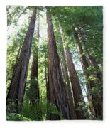 Redwoods Sequoia Sempervirens Fleece Blanket