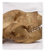 Kodiak Bear Skull Fleece Blanket
