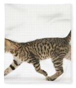 Tabby Kitten Fleece Blanket