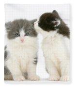 Kittens Fleece Blanket