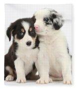 Boreder Collie Puppies Fleece Blanket