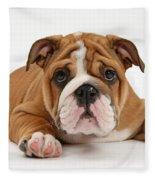Bulldog Puppy Fleece Blanket