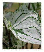 Caladium Named White Christmas Fleece Blanket