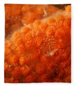 Close-up Of Live Sponge Fleece Blanket