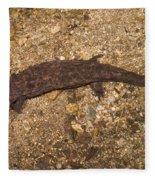 Japanese Giant Salamander Fleece Blanket