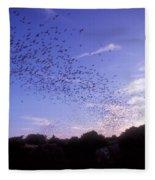 Mexican Freetail Bats Fleece Blanket