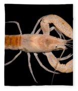 Miami Cave Crayfish Fleece Blanket
