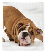 Playful Bulldog Pup Fleece Blanket
