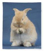 Rabbit Grooming Fleece Blanket