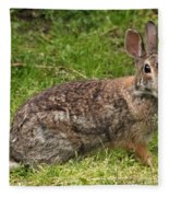 Rabbit Fleece Blanket