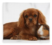 Ruby Cavalier King Charles Spaniel Pup Fleece Blanket