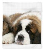 Saint Bernard Puppy With Rabbit Fleece Blanket