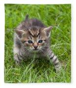 Small Kitten In The Grass Fleece Blanket