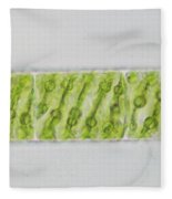 Spirogyra Sp. Algae Lm Fleece Blanket