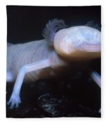 Texas Blind Salamander Eurycea Rathbuni Fleece Blanket