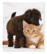 Toy Poodle Puppy With Kitten Fleece Blanket