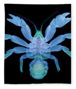 X-ray Of Coconut Crab Fleece Blanket