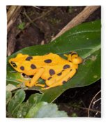 Harlequin Toad Fleece Blanket