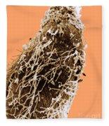Bacteria On Sorghum Root Tip Fleece Blanket