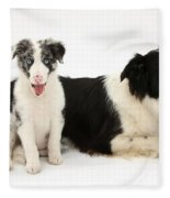 Border Collies Fleece Blanket