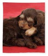 Doxie-doodle Puppies Fleece Blanket