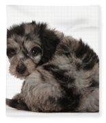 Doxie-doodle Puppy Fleece Blanket