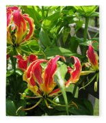 Gloriosa Named Rothschildiana Fleece Blanket