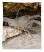 Mclanes Cave Crayfish Fleece Blanket