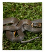 Northern Ringneck Snake Fleece Blanket